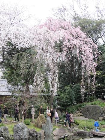 20100404yasukuni2